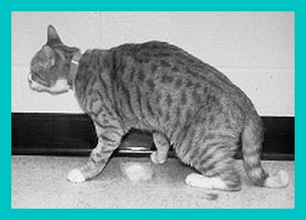 delectables cat treats